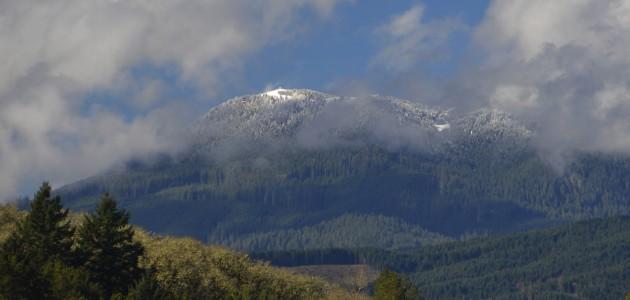 Marys Peak-Spring