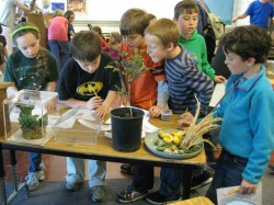 Mtn View wetland days kids
