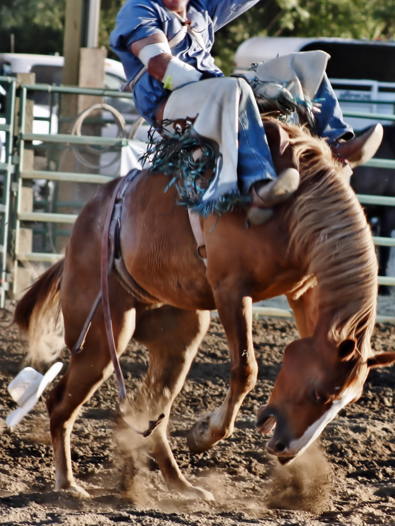 Philomath Rodeo