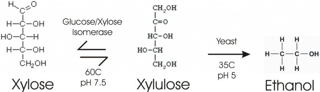 TrilliumXYloXyluSmall