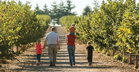 Hazelnuts: The Oregon Nut